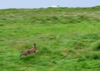 rabbit-2405552_640